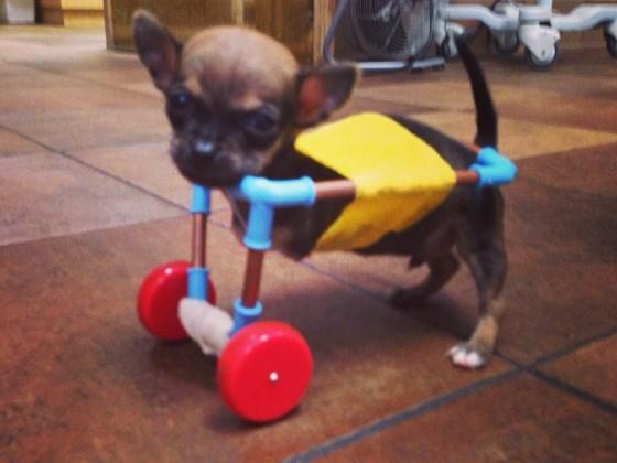 La sedia a rotelle ricavata da un giocattolo