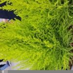 Sample fotocamera posteriore Galaxy S6 scattate da utenti